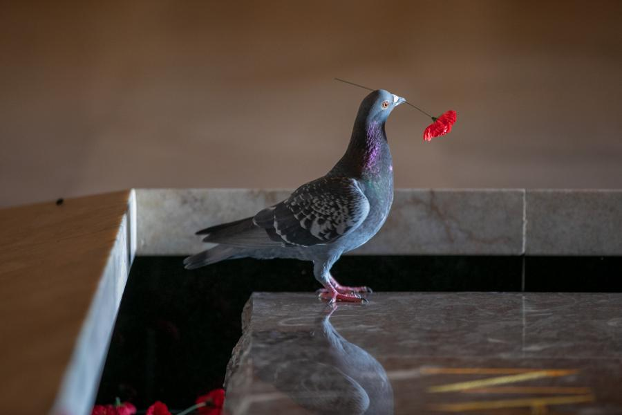 Pigeon in the Hall of Memory