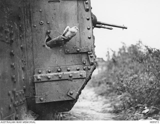 Pigeon during the First World War